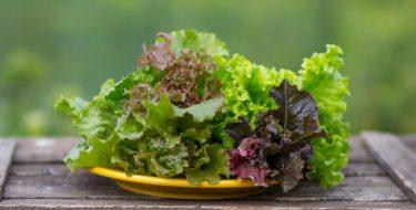 Πως διατηρούμε τα φυλλώδη λαχανικά