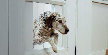 CES 2021: «Έξυπνη» πόρτα σκύλου myQ Pet Portal