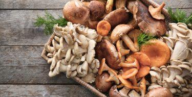 Μανιτάρι, ο μύκητας που αγαπάμε!