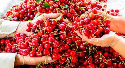 Κεράσια… η κόκκινη «δύναμη»!
