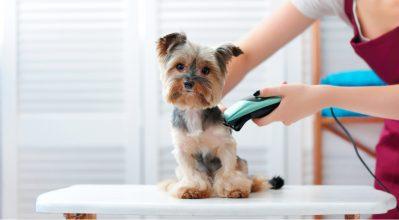 Κάνε το grooming διασκέδαση