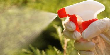 Τι πρέπει να προσέξεις με την οικιακή χρήση εντομοκτόνου