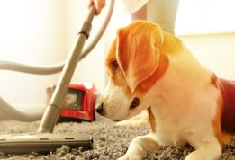 Πως να διατηρείς καθαρό ένα σπίτι με κατοικίδιο
