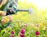 Εξοικονόμησε νερό στη φροντίδα του κήπου