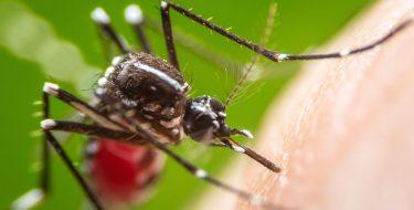 Έτσι θα αντιμετωπίσεις τα κουνούπια αυτό το καλοκαίρι!