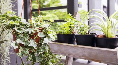 Πώς να προστατεύσεις τα φυτά σου από το κρύο