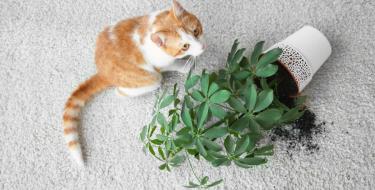 Φυτά που είναι επικίνδυνα για το κατοικίδιό σου.