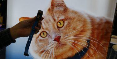 CES 2018: GPS κολάρο για γάτες από την Tractive